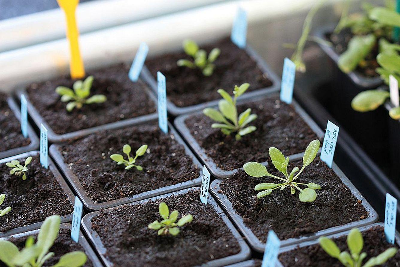 Warum Sind Pflanzen Grün